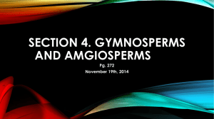 Section 4. gymnosperms and angiosperms