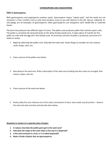 SeedPlants_GymnospermsAngiosperms_labactivity