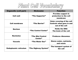 Functions of Plant Organelles