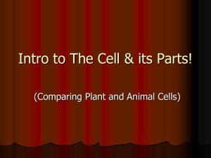Intro to Cell Vocabulary
