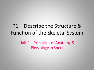 P1 * Describe the Structure & Function of the Skeletal