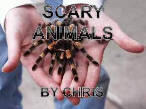 scary animals by chris