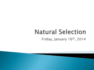 Natural Selection - Mr. Littman's Science Class