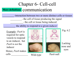 Chapter 4- Genes and development