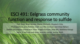 Sulfide Content in Eelgrass as Related to Sediment Sulfide