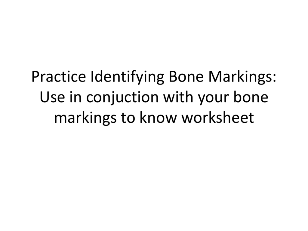 Practice Identifying Bone Markings Use In Conjuction With Your Bone