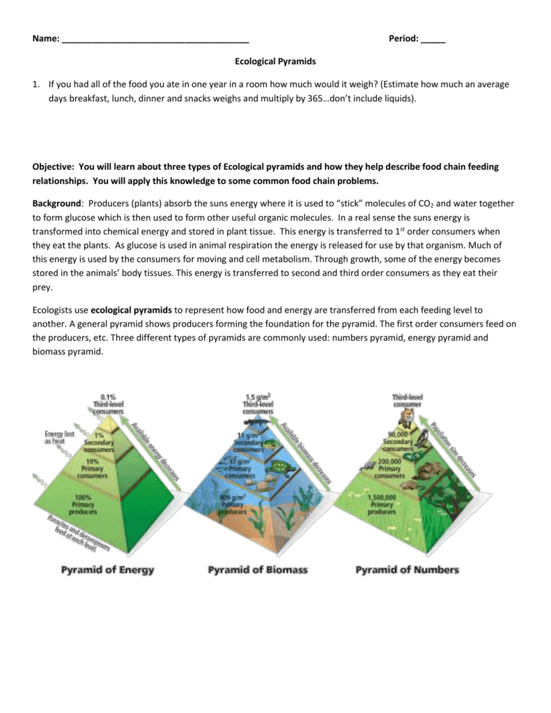 0095210021337006952fd2d19fd8a5a0209be7dc98png – Ecological Pyramids Worksheet