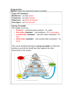 Energy Pyramid Notes