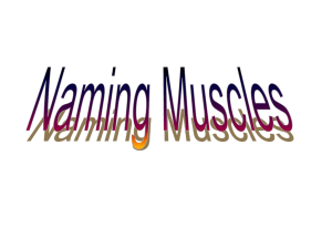 Naming Muscles