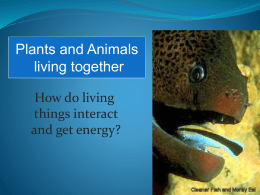 Plants and Animals Living Together
