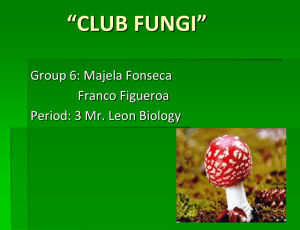 The Club Fungi powerpoint