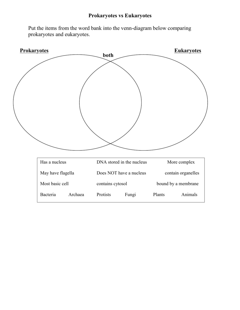 Prokaryote Eukaryote Comparison