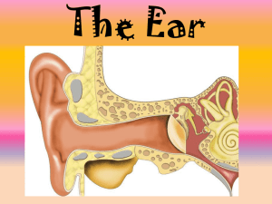 Hearing and Sight PPT