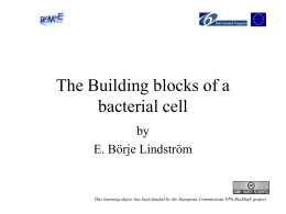 The Building blocks of a bacterial cell