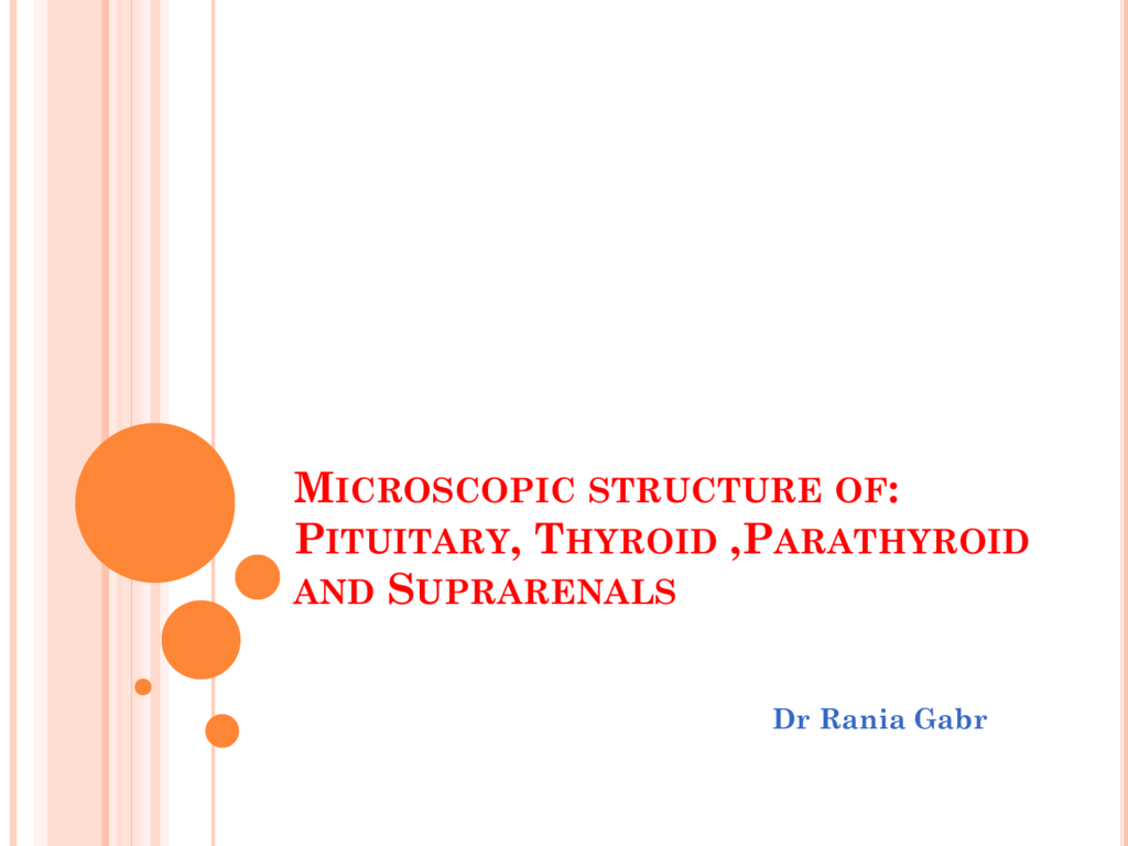 Microscopic Structure Of Pituitary Thyroid Parathyroid