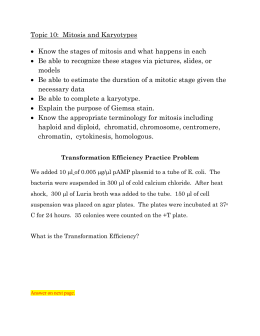 Mitosis/Karyotype Study Guide and Trans. Efficiency Practice