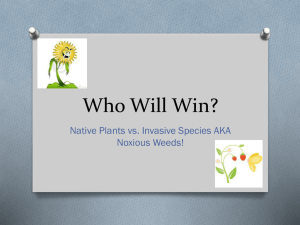 Who will win? - Native Plants and Invasive Species, aka Noxious