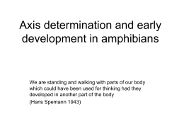 Frog dev and axis formation