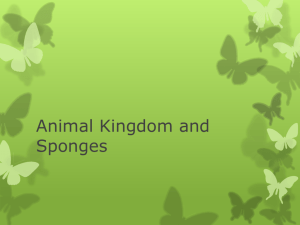 Sponges and the animal kingdom