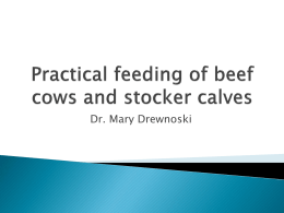 Practical feeding of beef cows and stocker calves