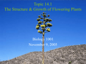 An Overview of Plant Growth