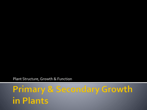 Primary & Secondary Growth in Plants