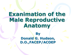Exanimation of the Male Reproductive Anatomy