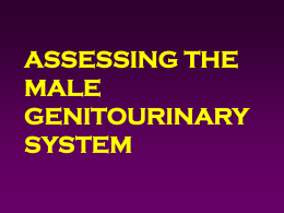 MALE GENITOURINARY ASSESSMENT