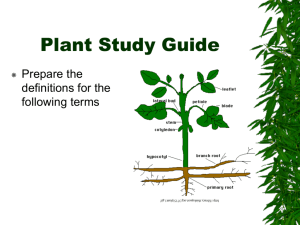 Plant Study Guide NPD
