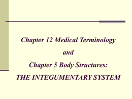 CHAPTER 12: THE INTEGUMENTARY SYSTEM