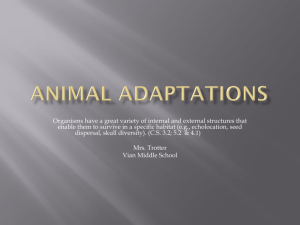 Animal Adaptations - Vian Public Schools
