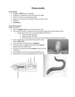 Kingdom Animalia: Higher Invertebrate Animals