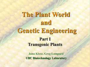 The Plant World and Genetic Engineering