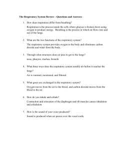 Respiratory System Review Questions ANSWERS