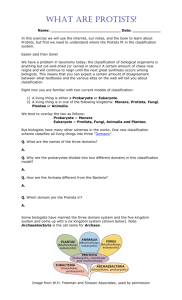 Protist Worksheet