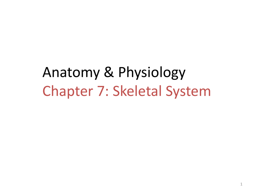 Anatomy & Physiology Chapter 7: Skeletal System