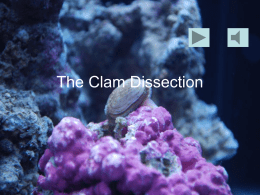 The Clam Dissection