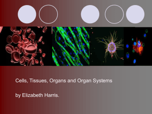 Cells, Tissues, Organs and Organ Systems