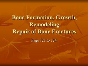 Bone Formation, Growth, Remodeling Repair of Bone