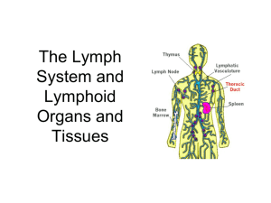 ppt of lymph system - faculty development