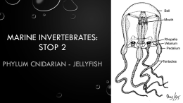 01 Jellyfish Notes