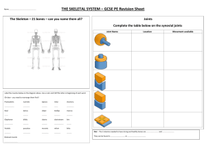 THE SKELETAL SYSTEM – GCSE PE Revision Sheet Joints