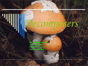 Decomposers - hurleyscience