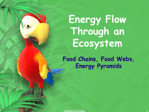 Energy Flow Through an Ecosystem Food Chains, Food Webs