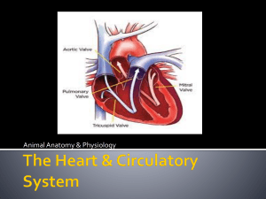 Lesson 5 * Intro to circulatory system and BLOOD