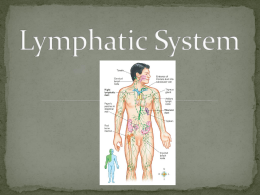 Lymphatic System Power Point
