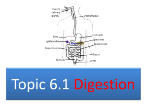 Digestion Core 2015