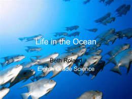 Life in the Ocean - Catawba County Schools