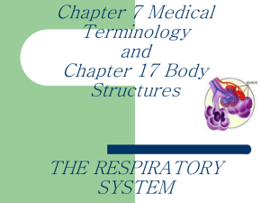 CHAPTER 7: THE RESPIRATORY SYSTEM