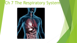 Ch 7 The Respiratory System